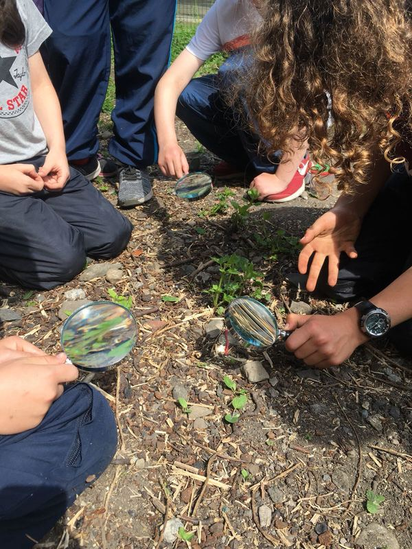 Children investigating the ground with magnifying glasses